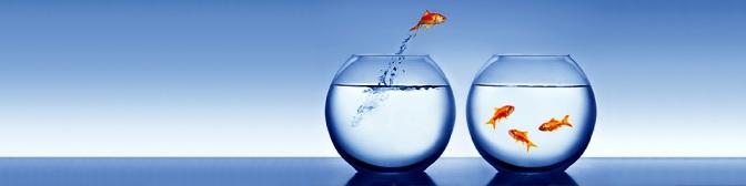 fish-jump.jpg